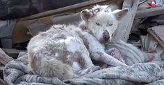 Az éhhalál küszöbéről mentették meg a szeméttelepen sínylődő kutyát. Megtalálóit sokkolta a látvány! - Minden, ami kutya!