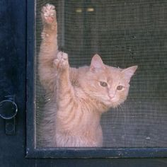 This is a guide about keeping cats from scratching screen doors. Cats can quickly ruin a screen door with their claws. Training your cat to not scratch at the screen will save you money and allow your screen door to serve it's purpose.