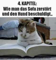 hahaha I already found it strange 😍😍😍 … - Katzenrassen Beautiful Cats Funny Animal Pictures, Funny Animals, Cool Pictures, Cute Animals, Humor Facebook, Tierischer Humor, Gatos Cool, Daily Jokes, Beautiful Cats