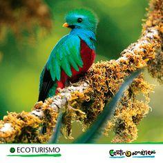 ¿Eres amante de la naturaleza? De seguro te encantarán los bosques y las aves.. Por eso, no debes dejar de visitar Centroamérica, pues encontrarás   más de 800 especies de aves!