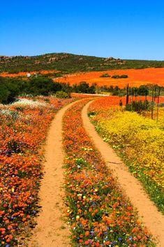 荒涼とした半砂漠地帯に、一年のうち一瞬だけ花が咲き乱れる奇跡の花園があります。ここではそんな、南アフリカ共和国のナマクワランドの花畑をご紹介します。image by iStockphotoナマクワランドとは、南アフリカ共和国の北ケープ州に広がる、半砂漠帯に属する一帯です。image by iStockphot |アフリカ, 南アフリカ共和国|旅行・観光のおすすめ「wondertrip」