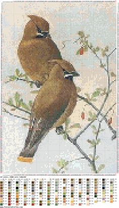 Cedar Waxwings (bbj2283) 1/1