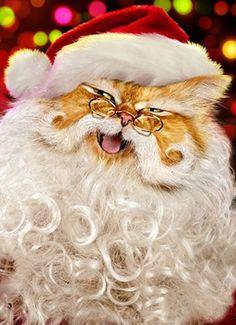 SCOOP : le Père Noël est un chat !!!