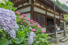 Enma-dō (閻魔堂) of Yata-dera (矢田寺) in Nara Prefecture, known for its 10.000 Hydrangea (ajisai-紫陽花). Inside is a wooden statue of Great King Enma (閻魔大王) dating back to the Kamakura period (鎌倉時代, 1185–1333).