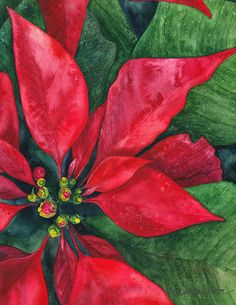 Poinsettia Painting - Navidad by Casey Rasmussen White Watercolor Christmas Cards, Christmas Drawing, Watercolor Cards, Watercolor Flowers, Painting Flowers, Watercolor Painting, Christmas Poinsettia, Christmas Flowers, Noel Christmas