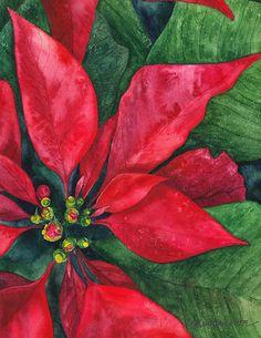 Navidad Fine Art  flor Mexicana nochebuena