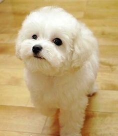 I am the cutest one in the world #babyanimals#kiss#love#cute#dog#puppy#babydog#doglover#like#beautiful#nice#like#l4l#follow4follow