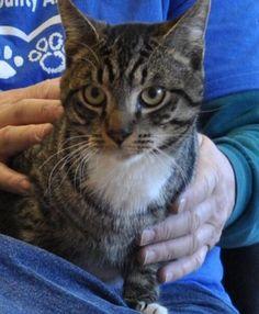 Ziggy- Adopted!