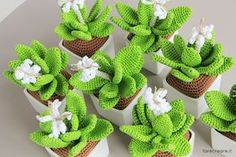 crochet cactu flower at DuckDuckGo Diy Crochet Flowers, Crochet Cactus, Knitted Flowers, Crochet Flower Patterns, Cactus Craft, Amigurumi For Beginners, Cactus Plante, Cactus Y Suculentas, Amigurumi Patterns