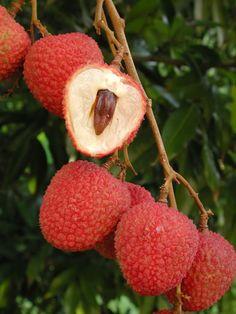80 Best Fruit images in 2015   Fruit, Exotic fruit, Fruits, veggies