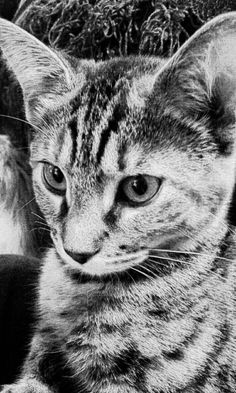 Black and white of Penny