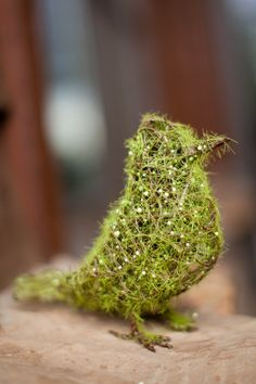 Moss bird - Gotta check the directions out!  This looks like something to chirp about!