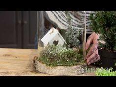 Stilleven onder stolp met hout - Green your day