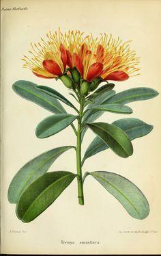 Anne 1865 - Revue horticole. - Biodiversity Heritage Library