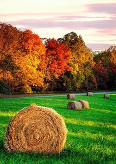Country Living ~ Fall days