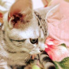 ネコの画像 プリ画像