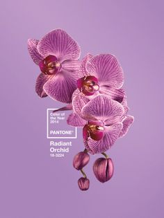 Pantone's Colour of the Year 2014 is a rosy pink - Digital Arts thanks to @Amanda_Gea