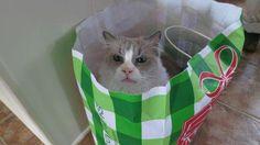 Mom, there's no tuna in here!