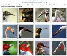 Bird Feeding Adaptations: How Beaks are Adapted to What Birds Eat ...
