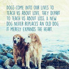 Golden love!!!