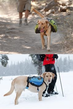 Guess what the puppies put on their list to Santa!  The Ruffwear Dog Pack