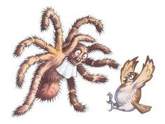 goliath birdeater spider illustration