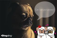 """Valentine's Day was a week ago—we hope you all made the most of it! Unfortunately, not everyone had a """"special someone"""" to spend Valentine's Day with (like this pug).  Instead of feeling sorry for yourself, get out there and meet someone, and use Dingaling to communicate with them! With cute stickers (like these pugs), tons of media sharing options, and free calling, Dingaling is the perfect tool to help you turn that spark into a flame <3  www.dingaling.com  #Pug #Hug #Love #Dating Feeling Sorry For Yourself, Meeting Someone, Cute Stickers, Pugs, French Bulldog, Dating, Feelings, Pictures, Free"""