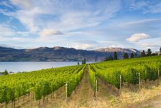 In recent years, Washington's wine industry has become the fastest-growing agricultural sector in the state... with the number of wineries growing 400% in the last decade... http://www.winemag.com/columbia.jpg