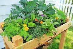 Overgrown Elevated Gardening Box