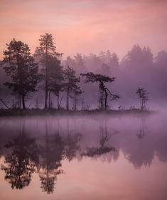 Before the sunrise at Lemmenjoki National Park Finland landscape Nature Photos Sunrise Lake, Picture Tree, Before Sunrise, Amazing Nature, Nature Photos, Pretty Pictures, Finland, Mother Nature, Natural Beauty