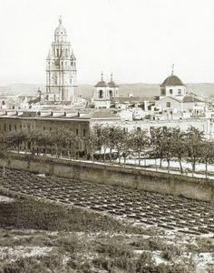 Plantaciones de tomates junto a La Glorieta hace un siglo, Murcia
