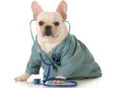 6 Common Pet Health Myths Debunked