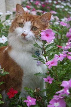 Pretty cat | gsfrenchshabbylife