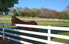Traditional Horse Fence Electric and horse fence types