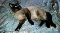 D Chapin's Cats ~ My favorite Daddy cat
