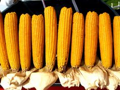 So fresh! My what a lot of corn...