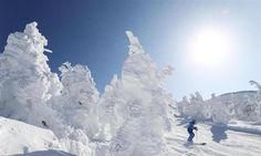 蔵王温泉スキー場で見頃を迎えた樹氷。大きく育ったアイスモンスターの脇をスキーヤーらが滑り抜けた=1日、山形市 / 「白い怪物」群れ成す 山形・蔵王、樹氷が見頃 / 産経フォト #蔵王温泉 #ゲレンデ