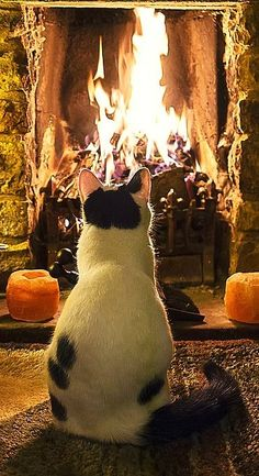 cats in front of fires
