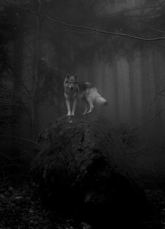 """There are nights when the wolves are silent and only the moon howls"" - George Carlin"
