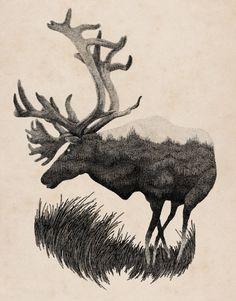 Inspiring and Delicate Wild Nature Illustrations – Fubiz Media