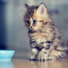 #Cats  #Cat  #Kittens  #Kitten  #Kitty  #Pets  #Pet  #Meow  #Moe  #CuteCats  #CuteCat #CuteKittens #CuteKitten #MeowMoe      Cutest Pic Ever! ...   http://www.meowmoe.com/42178/