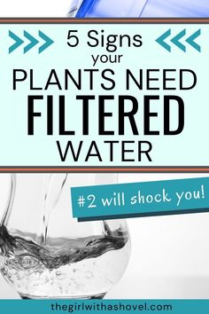 Don't just wonder. Find out EXACTLY if your tap water is treating your plants good, or if they would prefer something a little more filtered. Stop guessing... Look for these 5 symptoms! Indoor Plant Care | Houseplants | House Plant Care | How to Water Indoor Plants | Air Plants, Indoor Plants, Apartment Plants, House Plant Care, Plant Needs, Houseplants, Diy Design, Filters, Water