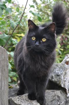 Looks like the black version of my cat
