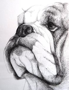 The major breeds of bulldogs are English bulldog, American bulldog, and French bulldog. The bulldog has a broad shoulder which matches with the head. Cãezinhos Bulldog, Bulldog Breeds, English Bulldog Puppies, British Bulldog, English Bulldog Art, Pet Breeds, Old English Bulldogs, Baby Bulldogs, French Bulldogs