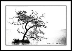 Tree Photograph in Black and White Coastal Water by McAnany