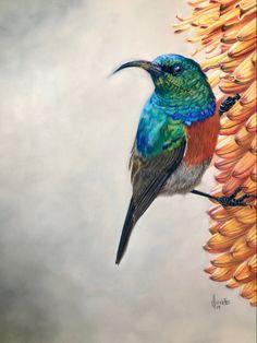 Recent Artwork - Sunbird on an Aloe Caran D'ache, White Highlights, Pastel Pencils, Wildlife Art, New Set, Bird Prints, Bird Art, Pet Portraits, The Dreamers