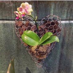 Bom diaaaa!!! O nosso coração para mini orquídeas está de volta!! Para deixar a sua varanda ou jardim ainda mais bonito e florido... Ele já está em nosso site. Link na bio! #orquídea #jardim #varanda #flores #decorarcomflores #home #casa #decoracao #valentina