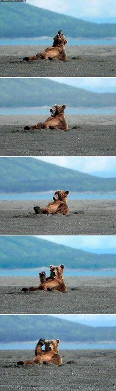 awe! friendly bear! :)