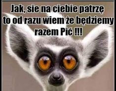 the funny actions of the pets around our live The Funny, Haha, Jokes, Animals, Motto, Poland, Meme, Album, Google