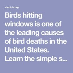 Birds hitting windows is one of the leading causes of bird deaths in the United States. Learn the simple step you can take to prevent bird fatalities.